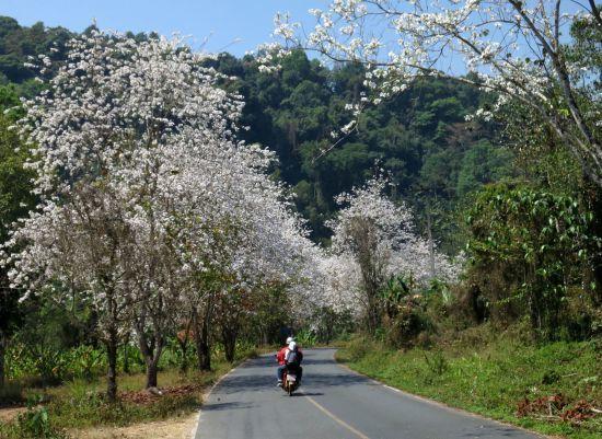 mountain flower 2.jpg
