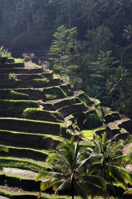 rice terrace_640.jpg